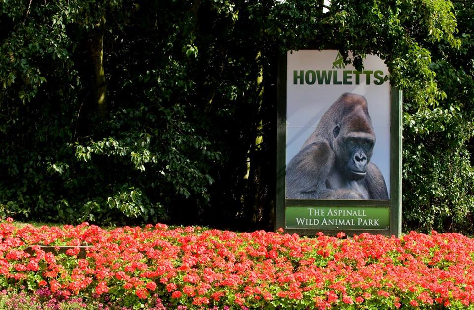 Welcome to Howletts!